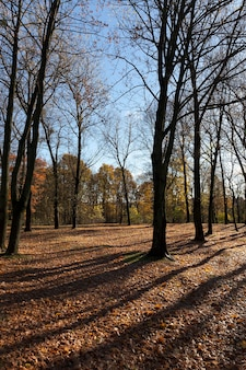 Hilly territory on which deciduous trees grow in the autumn season, there are no leaves on the trees what is the specificity of the autumn season