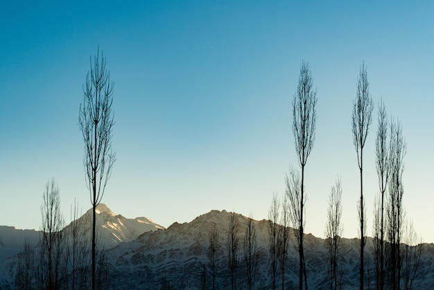 The himalayas range at the sunrise time with shadow of a tree