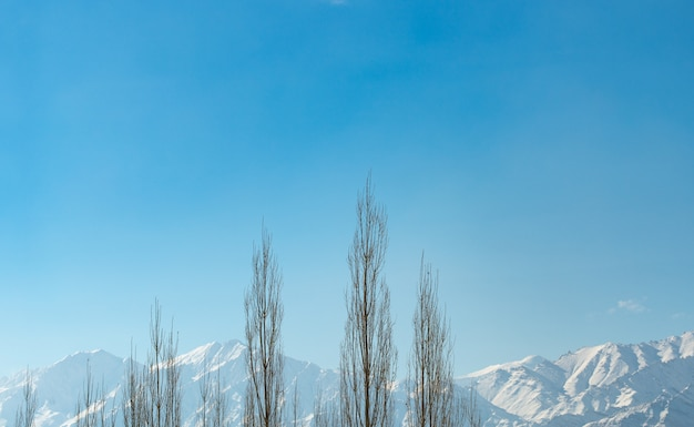 Himalayas range with clear blue sky and shadow and tree frame