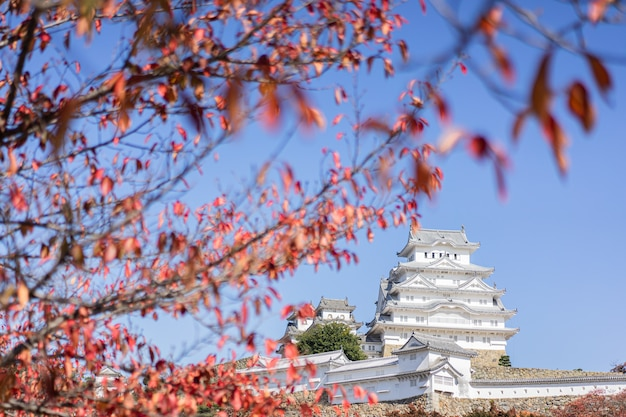 Замок химэдзи и осенние листья, красные кленовые листья, япония