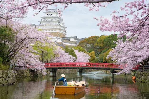 Himeji castle with beautiful cherry blossom in spring season at hyogo near osaka, japan.