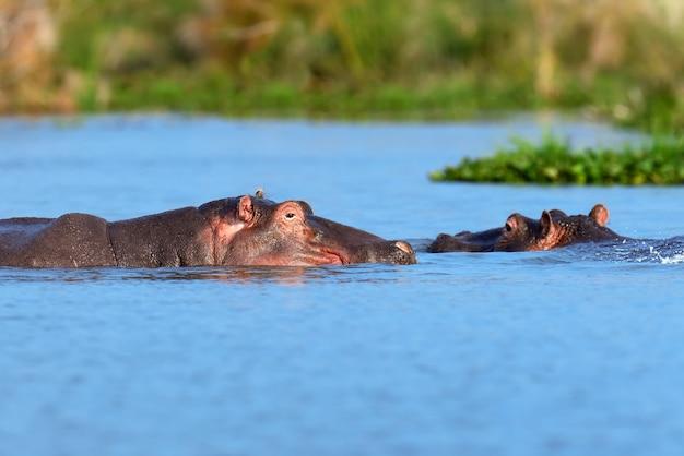 カバ族。ケニア、アフリカ