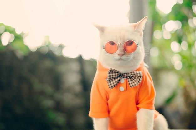 Портрет hipster white cat в темных очках и рубашке