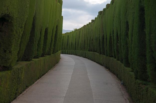 歴史的な風景の宮殿の城の道