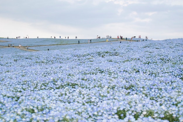 Hitachi seaside park scene