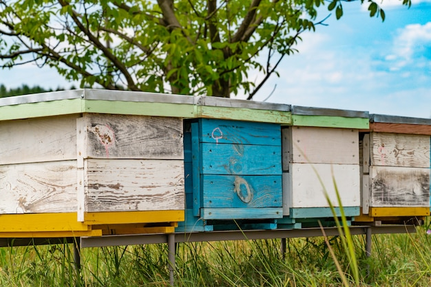 Hives in an apiary with bees flying to the landing boards in a green garden.