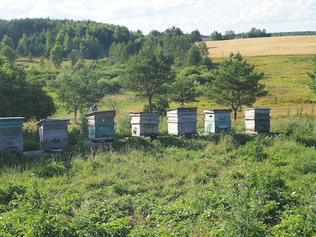 여름에 시골의 푸른 초원에 벌집이 서 있다