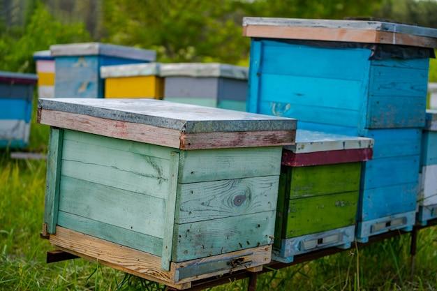 Ульи на пасеке. жизнь рабочих пчел. рабочие пчелы в улье. пчеловодство. курильщик пчел на улье.