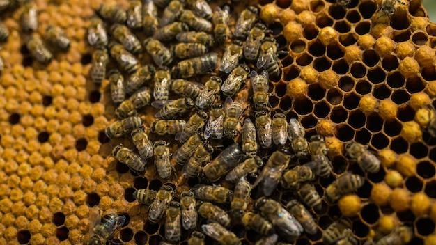 Ульи на пасеке с пчелами, летящими к посадочным платам в зеленом саду