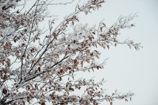 Hoarfrost covered tree branches against the sky