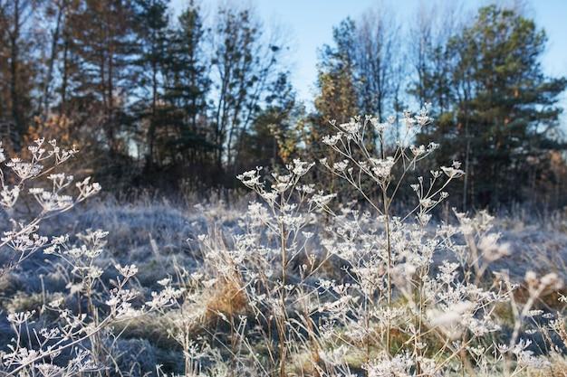 Иней на сухой траве на лугу синем фоне. замерзшая трава или полевые цветы. первые заморозки на осеннем лугу сельской местности. зимний фон. мягкий фокус. копировать пространство