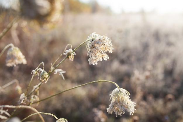 Иней на сухой траве на лугу. первые заморозки на осеннем лугу сельской местности.