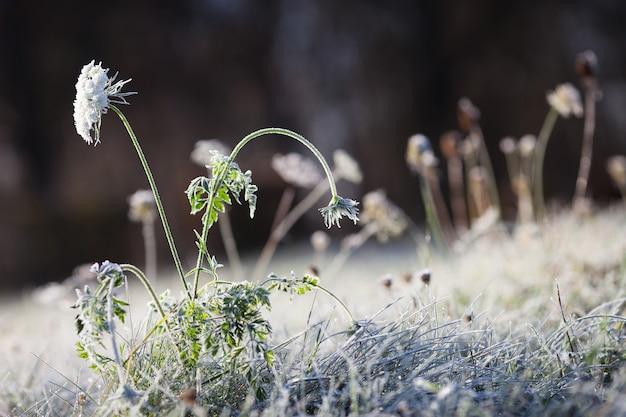 Иней на сухой траве на лугу. замерзшая трава или полевые цветы. первые заморозки на осеннем лугу сельской местности. зимний фон. мягкий фокус. копировать пространство