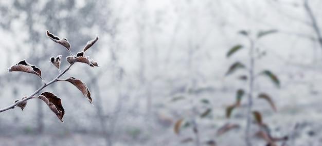 Иней на ветках яблони в зимнем саду. замерзшие ветви и сухие листья яблонь. зимний вид