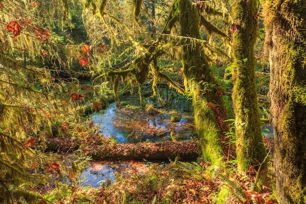 미국 올림픽 국립공원의 호우 우림