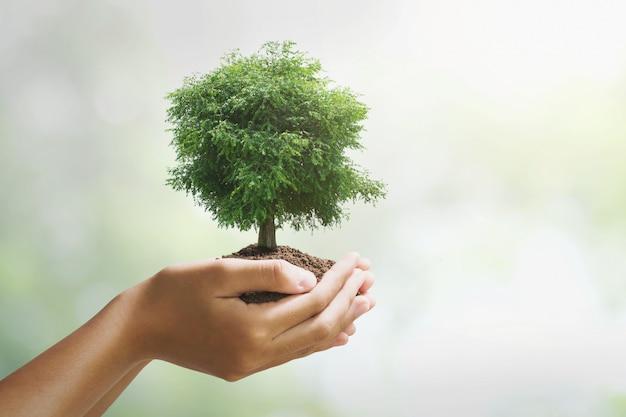 緑色の背景で成長している手holdig大きな木。エコアースデーのコンセプト