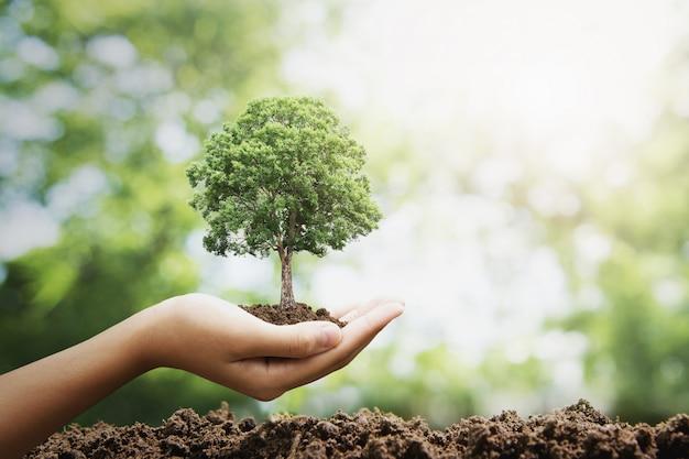 緑の背景に成長している手holdig大きな木。エコ地球の日の概念
