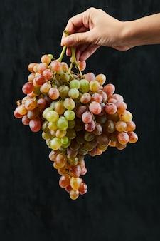 In possesso di un grappolo di uva rossa su sfondo scuro. foto di alta qualità