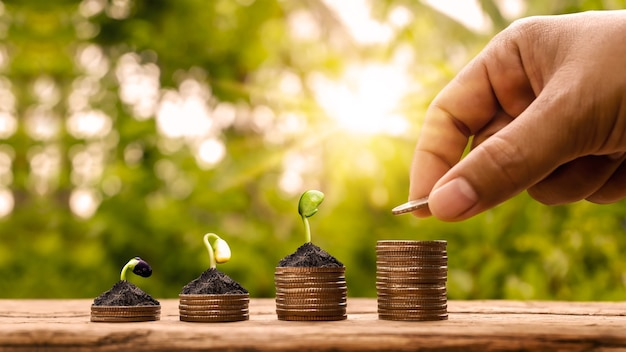 Holding a coin and a small tree planted on stacks of coins and natural light financial accounting and the concept of saving money