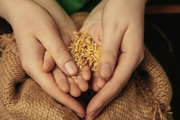 황금 색깔의 밀 곡물을 들고. 함께 다른 일을하는 여성과 아이의 손의 총을 닫습니다. 가족, 가정, 교육, 어린 시절, 자선 개념. 어머니와 아들 또는 딸, 부.