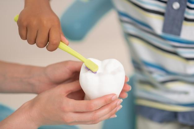 제대로 잡고 있습니다. 치아 모델을 칫솔질하는 동안 제대로 칫솔을 들고 소년의 닫습니다
