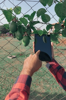 Holding a tablet on the farm, passion fruit plant in the background. space for text.