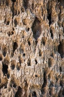 Отверстия в коре дерева