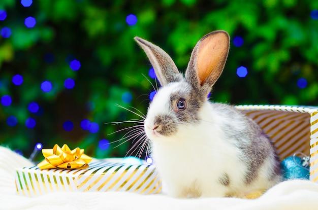 애완 동물 축제 토끼와 함께 크리스마스 카드입니다. 크리스마스 트리 아래 새 해에 황금 선물 상자에 앉아 아기 토끼.