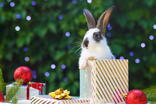 ペットとホリデーカード。新年のギフトボックスに座っている小さなかわいい赤ちゃんウサギ。お祝いバニー。クリスマスツリーの下の動物とお祝いの言葉。