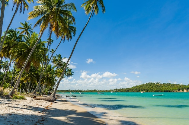 Holiday shadow, beautiful image of carneiros beach in pernanbuco
