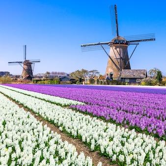 オランダの田園地帯