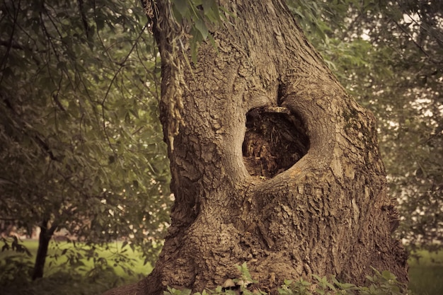 Hollow in the tree filtered