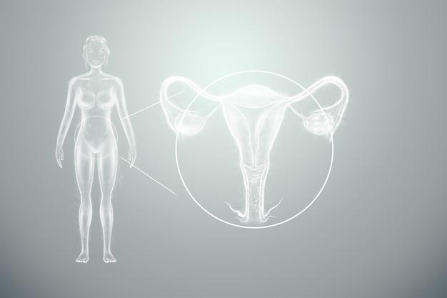 女性の体の子宮シルエットの女性の臓器のホログラム