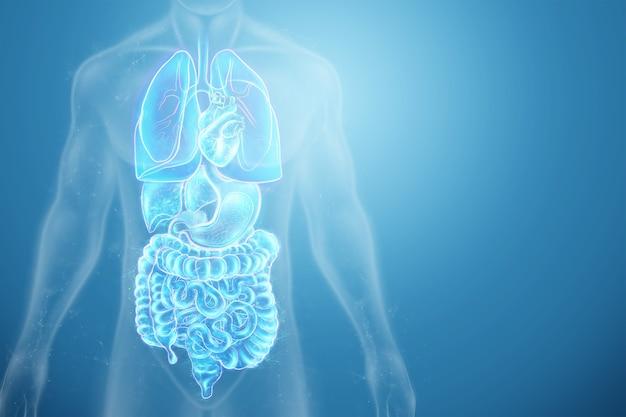 인간 내부 장기 스캔의 홀로그램 투영.