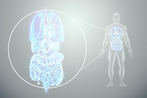 인간 내부 장기 스캔의 홀로그램 투영. 프리미엄 사진