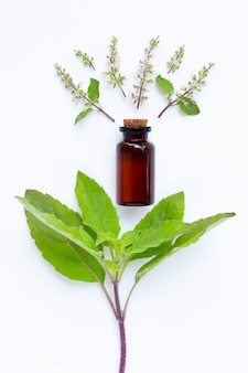 Holy basil essential oil with holy basil leaves and flower