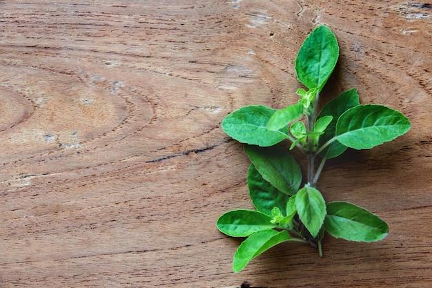 Holy basil leaf herb on wood