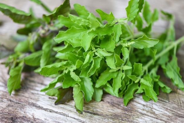 Святой базилик лист природа огород