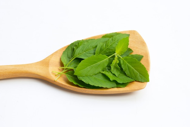 Holy basil leaves with spatula on white surface