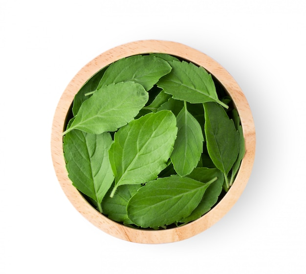 Holy basil leaves in wood bowl on white table.