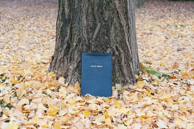 노란 낙엽이 있는 가을 야외 나무 줄기에 있는 성경