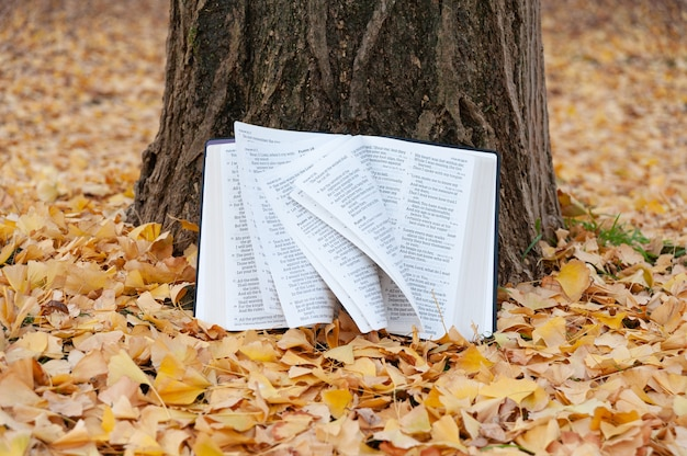 Библия открыта псалмом на стволе дерева со страницами, переворачивающимися на ветру японской осенью с опавшими желтыми листьями.