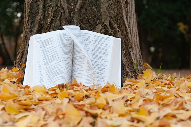 Holy bible opened in psalms on tree trunk with pages turning in the wind