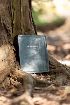 Holy bible outdoors on the tree trunk and sunlight.
