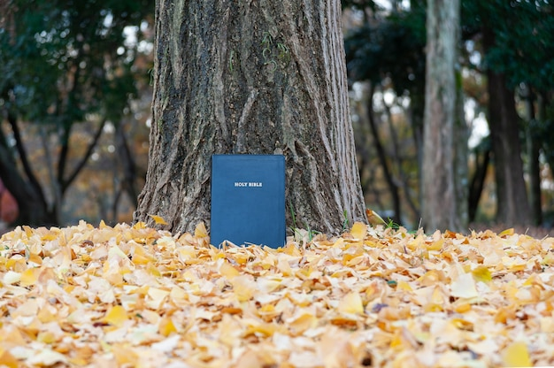 Holy bible on tree trunk outdoors in autumn with yellow fallen leaves copy space