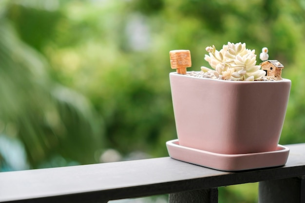 テラスのピンクの植木鉢にある多肉植物の家と庭のコンセプト