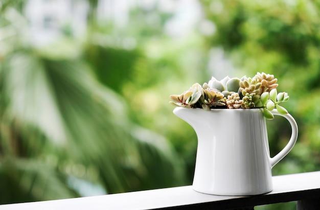 テラスの白い陶器の壷の中の多肉植物の家庭と庭のコンセプト