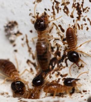 집 개미들이 벽 구석에 있는 개미집을 드나들고 들어갑니다. 매크로 사진.