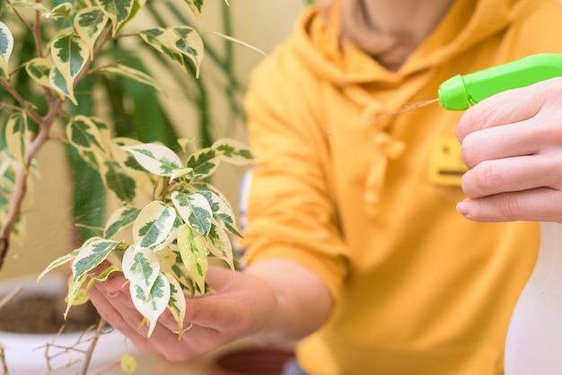 관엽 식물을 돌보고 스프레이 건으로 집 꽃을 뿌리십시오. 노란 스웨터를 입은 여성이 식물을 씻고 돌 봅니다.