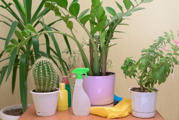 관엽 식물을 돌보고 스프레이 건으로 집 꽃을 뿌리십시오. 병에있는 꽃을위한 비료.